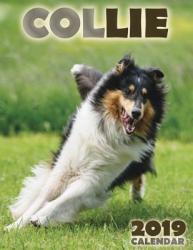 Collie 2019 Calendar (ISBN: 9781642521160)