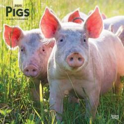 Pigs 2020 Square Wall Calendar (ISBN: 9781975409159)