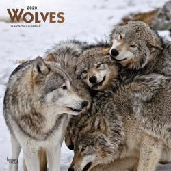 Wolves 2020 Square Wall Calendar (ISBN: 9781975405632)