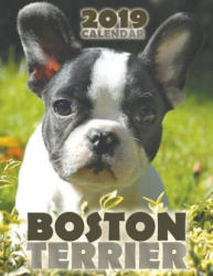 Boston Terrier 2019 Calendar (ISBN: 9781642521092)