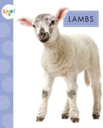 Lambs (ISBN: 9781681523729)