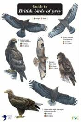 Guide to British Birds of Prey (2011)