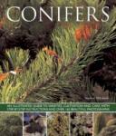Conifers (2013)