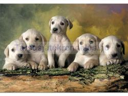 Educa Labrador kölykök 500 (14802)