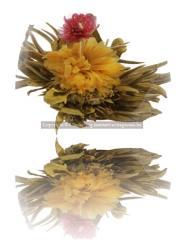 Jószerencse Virágzó Tea (1db gumó)