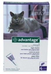 BAYER Advantage 80 Spot On 4kg feletti 0.8ml (4db)