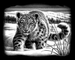 Reeves Ezüst képkarcoló - Fehér leopárd