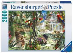 Ravensburger Dzsungel hangulatképek 2000 db-os (16610)