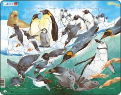 Larsen Pingvinek 50 db-os