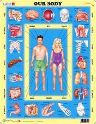 Larsen Az emberi test 35 db-os OB1