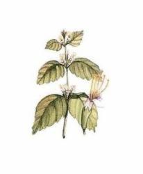 Andió Bio Pacsuliolaj 10ml