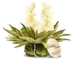 Creano Teelini - Jasmine Heaven virágzó teagolyó fehér teával 1db