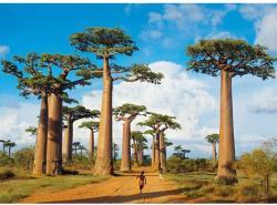 Clementoni Madagaszkár 1000 db-os (39272)