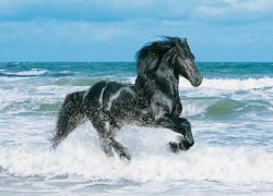 Clementoni Fekete ló 500 db-os (30175)