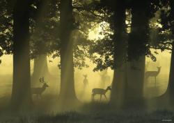 Heye Magic Forests - Deer 1000 db