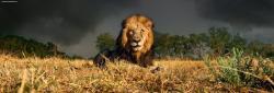 Heye Lion 1000 db-os