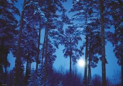 Heye Magic Forests - Full Moon 500 db-os (29625)