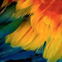 Heye Feathers 1000 db-os