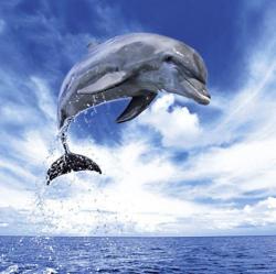 Heye Dolphin 1000 db-os