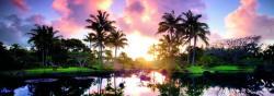 Heye Palm Trees (Edition Humboldt) 2000 db-os