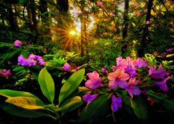Heye Magic Forests - Rhododendron 2000 db-os (29662)