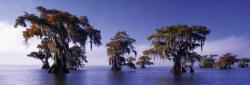 Heye Bald Cypresses (Edition Humboldt) 1000 db-os (29607)