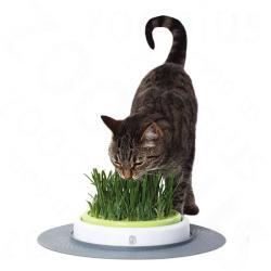HAGEN Catit Design Senses Gras Garden macskafű termesztő készlet (Ø24cm)