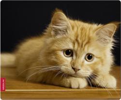 SPEEDLINK SL-6242-CAT