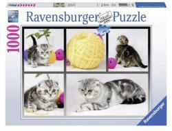 Ravensburger Brit rövid szőrű macskák 1000 db-os (19545)
