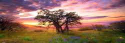 Heye Oak Tree (Edition Humboldt) 2000 db-os (29472)