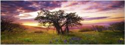 Heye Oak Tree (Edition Humboldt) 75 db-os