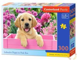 Castorland Labrador kölyök rózsaszín dobozban 300 db-os (B-030071)