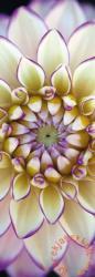 Schmidt Spiele Panoráma puzzle - Weisse Dahlie/Fehér dália 1000 db-os (59328)