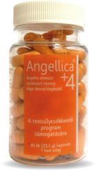 Celsus Angellica +4 kapszula - 60 db