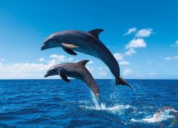 TACTIC Ugráló delfinek 1000 db-os (53864)