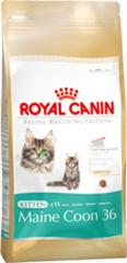 Royal Canin FBN Kitten Maine Coon 36 2x4kg