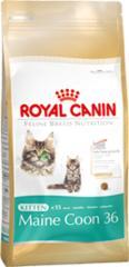 Royal Canin FBN Kitten Maine Coon 36 2x4kg
