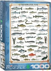 EUROGRAPHICS Freshwater Fish 1000 db-os (6000-0312)
