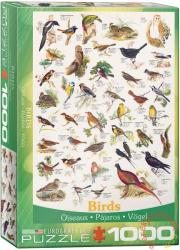 EUROGRAPHICS Birds 1000 db-os (6000-1259)