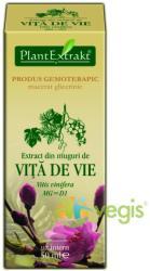 PlantExtrakt Extract din Muguri de vita de vie 50ml