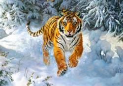 Castorland Szibériai tigris 500 db-os (B-52400)