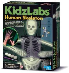 4M Kidz Labs - Emberi csontváz