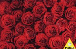 Piatnik Rózsaálom 1000 db-os (568640)