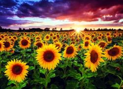 Anatolian Field of sunflowers at dusk - 1000 piese (1018) Puzzle