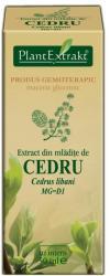 PlantExtrakt Extract din mlădițe de Cedru, 50 ml