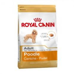 Royal Canin Poodle Adult 500g