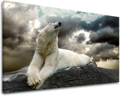 Tablouri canvas ANIMALE ZV001E11 (tablouri moderne pe pânză) (XOBZV001E11)
