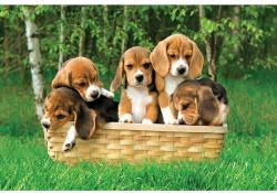 Trefl Beagle kiskutyák 60 (17166)