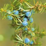 Farfalla Bio Borókabogyó Illóolaj 5ml