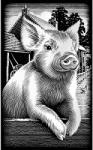 Reeves Ezüst képkarcoló - Malac